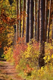 対称的な木が木々の間に成長し、さまざまな色の茂みが成長します、秋