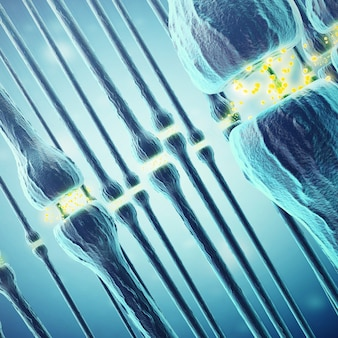 Synaptic transmission, human nervous system