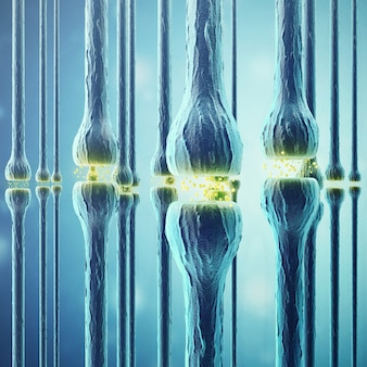Synaptic transmission, human nervous system.