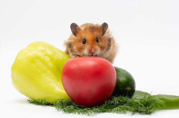 Syrian hamster eats fresh vegetables