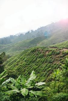 キャメロンハイランドはマレーシアの驚異の一つであり、国内最大かつ最も有名な丘のリゾートです。 t