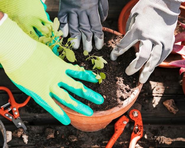 T鍋に植物を植える庭師の手のクローズアップ