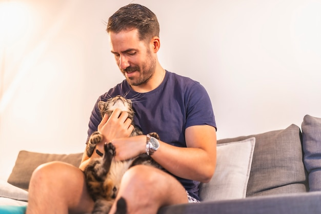 青いtシャツを着た若い黒髪の白人男性と彼の美しいグレーと白の飼い猫と一緒に家で遊んでいるショーツ。猫の男の親友。ソファーで可愛い猫をなでる