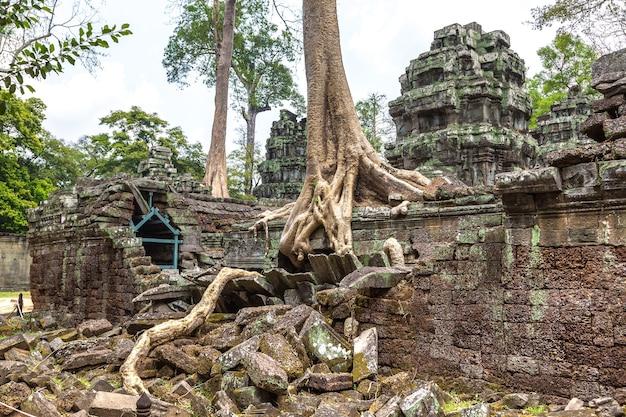 Ta prohm temple ruins in angkor wat in siem reap