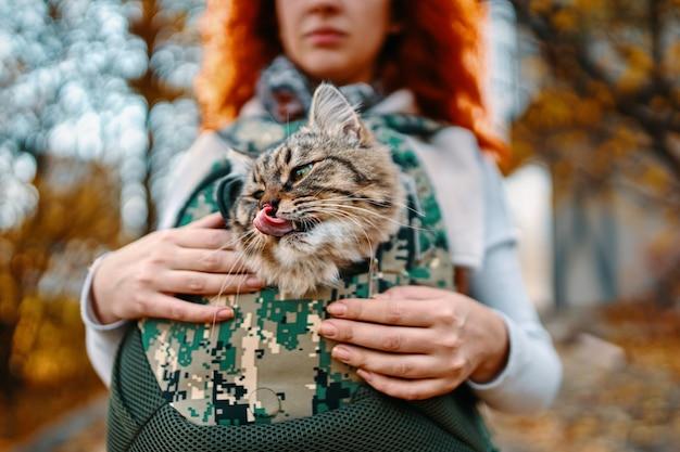 Tabby cat in a bag.