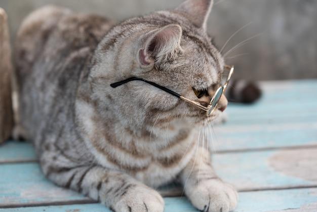 Стрельба из головы полосатого кота в очках с кактусом в глиняном горшочке с зеленью
