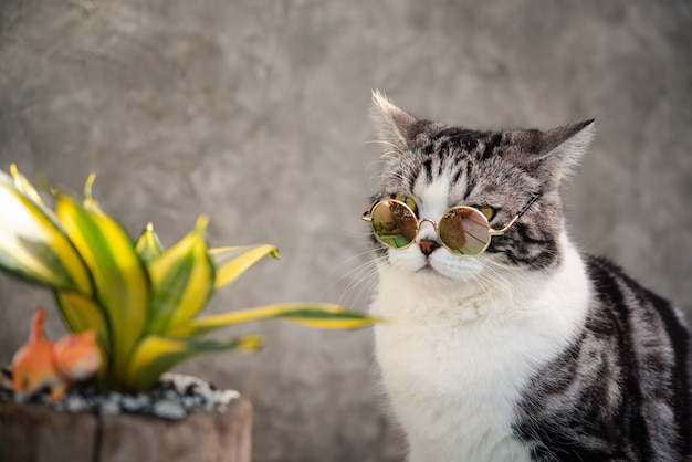 Tabby cat  head shot wear glasses with a cactus in greenery clay pot