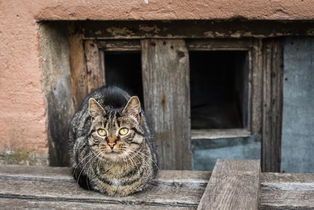 얼룩 무늬 고양이 노숙자가 오래된 다층 집 지하실에 앉아 있습니다.