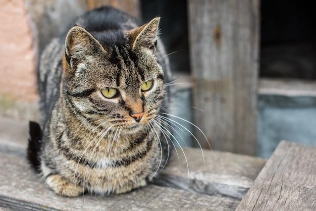 줄무늬 고양이 노숙자 앉아