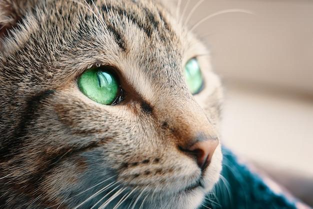 녹색 눈을 가진 창턱 새끼 고양이 근처 바구니에 얼룩 무늬 고양이는 애완 동물에 떨어지는 창 햇빛 밖으로 보이는 동물 초상화를 닫습니다