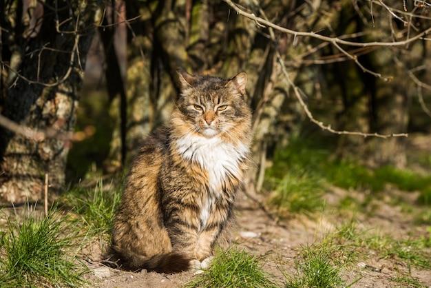 Полосатый кот в городском парке посмотрел на летающих птиц весной