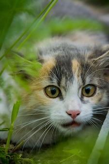 庭のトラ猫