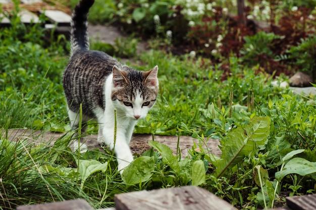緑の草のクローズアップのトラ猫。