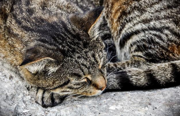 Полосатый кот лежит спит на лестнице у крыльца дома на тротуаре.