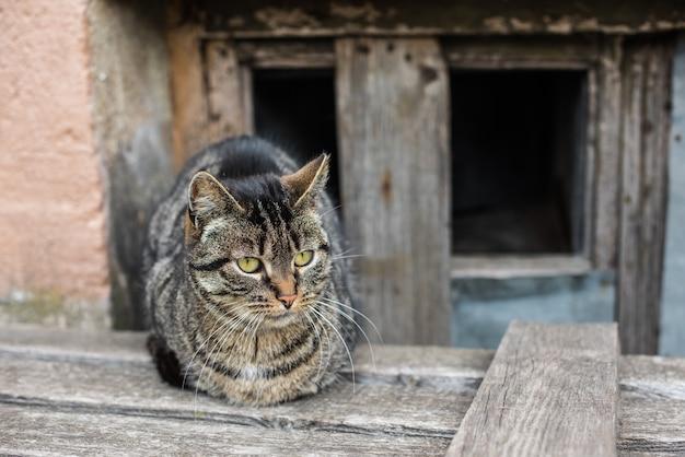 얼룩 무늬 고양이가 지하실에 앉아 있습니다.