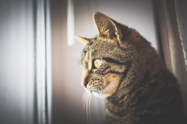 ぶち猫が窓の外を見て、猫が外を歩きたい