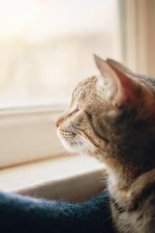 Полосатый кот с интересом смотрит в окно на улицу, солнечный свет киса сидит в постели у ветра ...