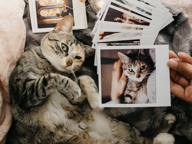 Tabby cat lying down in bed and several retro photos