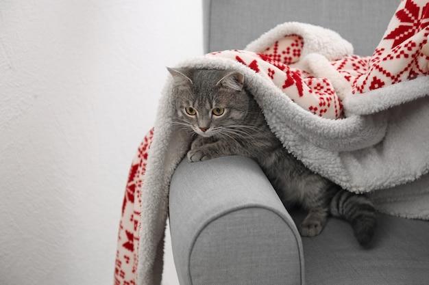 Tabby cat lying in grey armchair under plaid