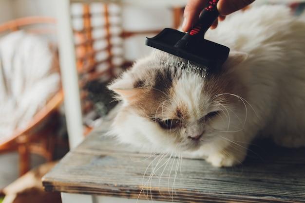 Полосатый кот лежит на столе в парикмахерской для кошек, когда его расчесывают и расчесывают. выборочный фокус.