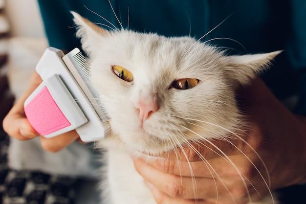 Полосатый кот лежит на столе в парикмахерской для кошек, когда его расчесывают и расчесывают.