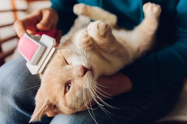 얼룩 고양이는 빗질하고 빗질하는 동안 고양이 미용사의 살롱에서 테이블에 누워 있습니다.