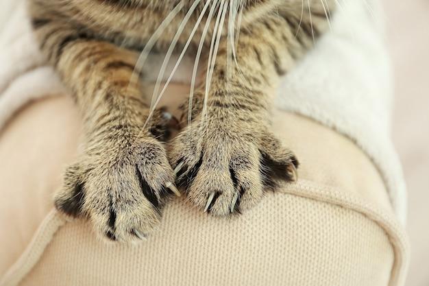 등받이에 줄무늬 고양이 발