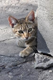 Полосатый кот выглядывает из угла дома.