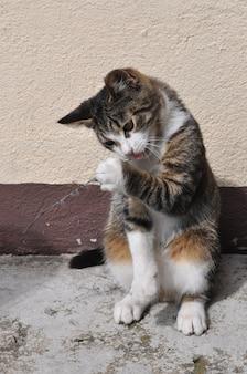 Полосатый кот играет с птичьим пером на улице