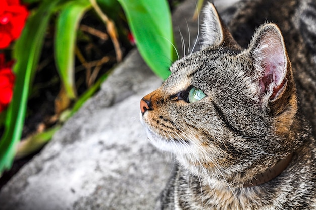 Tabby cat profile with green eyes closeup portrait