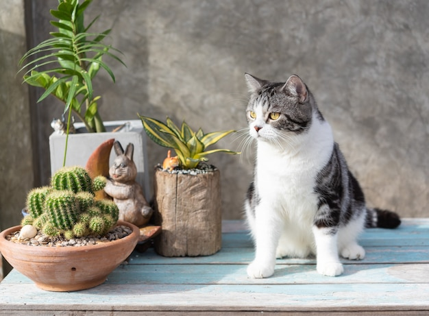 Tabby cat  sit on blue wooden table with a cactus in greeny clay pot
