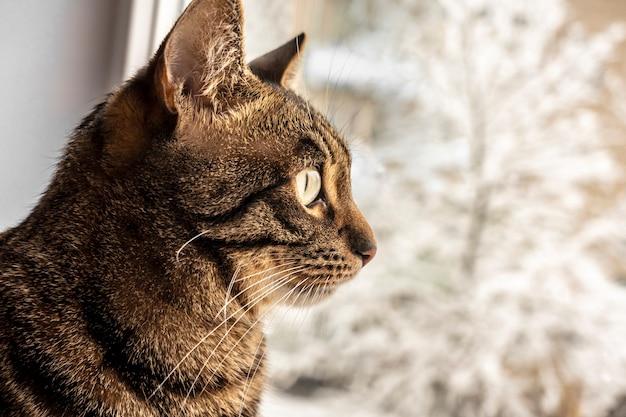 ぶち猫が座って、冬の景色を眺めながら窓の外を見ています。ベンガル猫。テキスト用のスペース。暖かさと家庭の快適さ。ホームレスの動物の問題。動物保護の日。獣医学。去勢