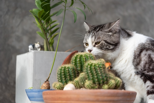 Tabby cat   sniffs a cactus in greeny clay pot