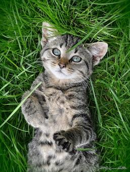Полосатый кот с красивыми глазами лежит в зеленой траве в солнечный день