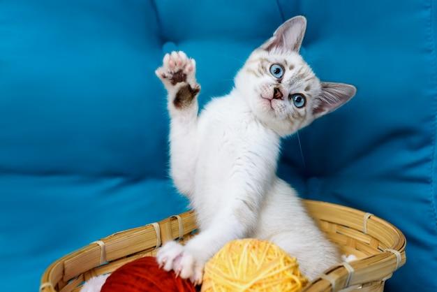 Полосатый котенок с голубыми глазами сидит в корзине возле мячей на синем фоне поднятой лапой