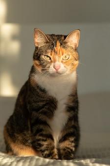 Полосатый трехцветный кот сидит на кровати с белым одеялом, смотрит в камеру и солнце