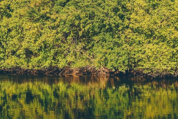 물 표면에 반사와 가을 숲의 테이블