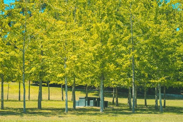 Стол со стульями спрятан под деревьями