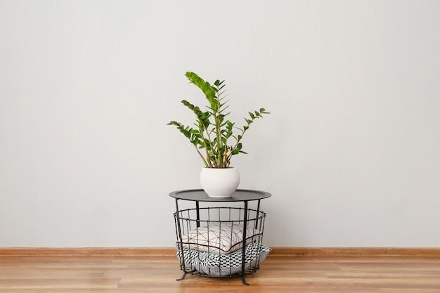 방의 밝은 벽 근처에 관엽 식물과 부드러운 쿠션이있는 테이블