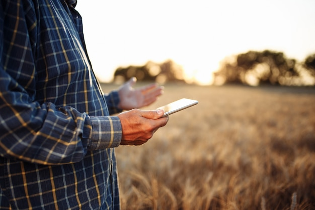 Tablet in the hands of a farmer at the golden wheat field