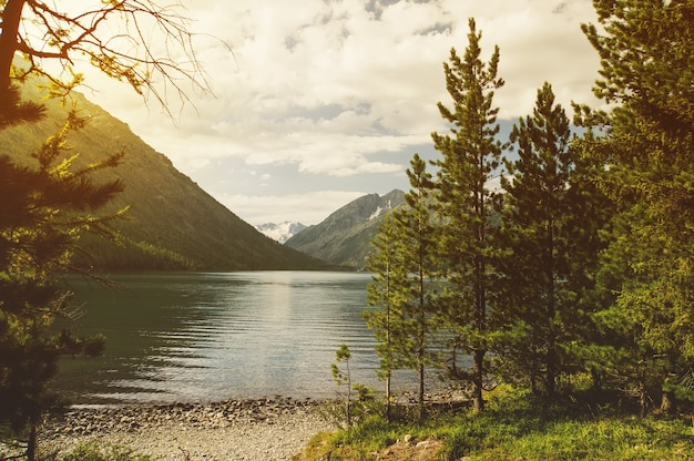 Taiga forest on the edge of the lake on a sunny day. view of the beautiful lake and mountains through the green spruce