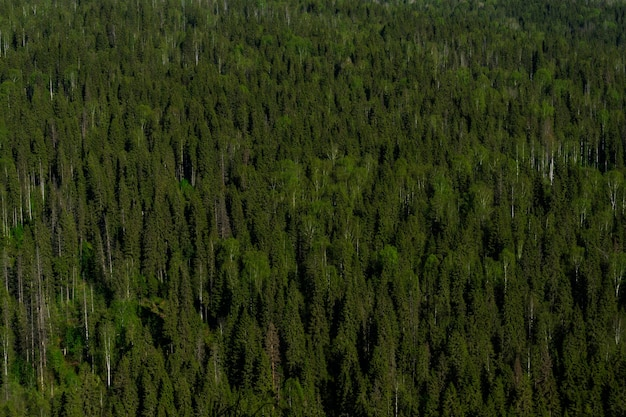 針葉樹林の地形で完全に覆われた鳥の目の景色を望む夏のタイガ