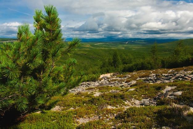 Таежный пейзаж якутии россия, ветка елки, летняя поездка в горы.