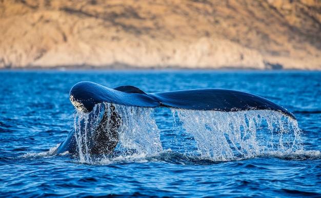 혹등 고래의 꼬리