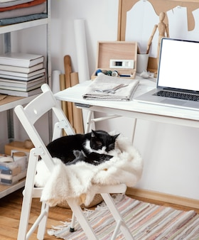 Tailoring studio with laptop and cat