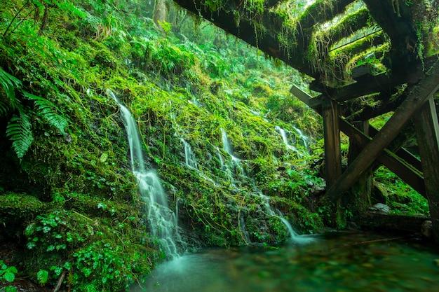 Тайваньская гора тайпин старая дорога цзяньцин, вода из горного источника рядом с лесной тропой