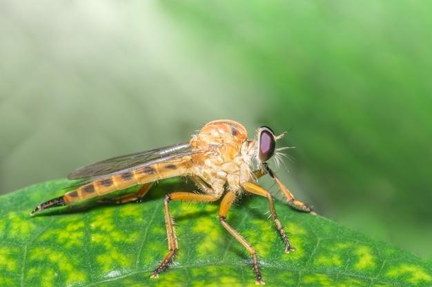 가까이 찍어 라 robberfly