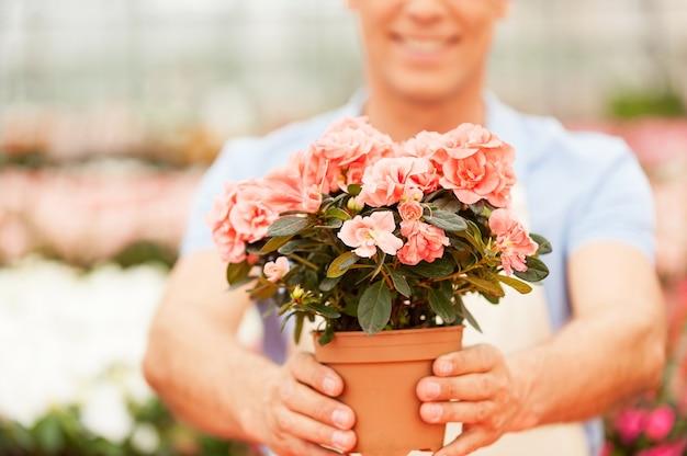 당신에게 꽃을 가져 가라. 온실에 서서 화분을 뻗고 웃고 있는 앞치마를 입은 남자의 자른 이미지