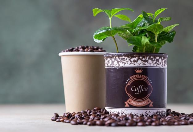 テイクアウトのコーヒーカップ、ポットに入ったコーヒーの木、ローストしたコーヒー豆。コーヒーショップのコンセプト。