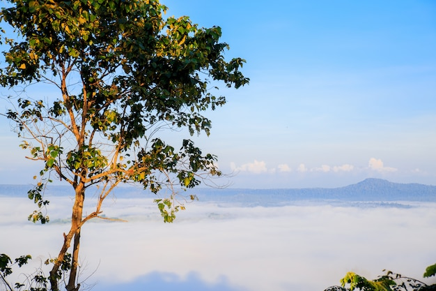 Takhian ngo mountain view with the sea of mist in the morning and twilight of sunrise in t